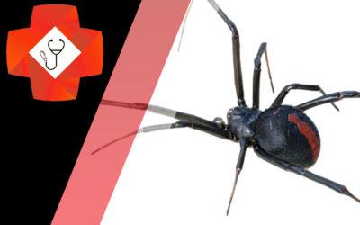 Redback Spider Bites